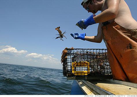 lobster_gi.top.jpg