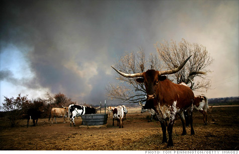 Scorched earth conditions have caused more than $5 billion worth of damage to Texas agriculture.