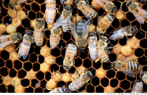 Despite mysterious mass deaths in honeybee colonies, beekeepers have so far prevented price spike of foods that bees pollinate like almonds, blueberries and cherries.