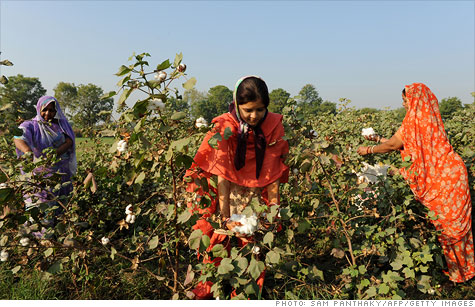 Cotton pickers in India