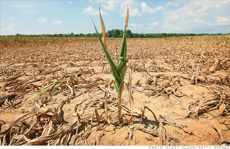 One of the worst droughts in U.S. could cost billions in food exports, but it shouldn't lead to worldwide food shortages.