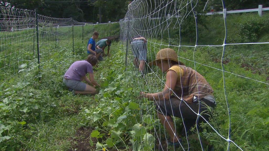 Newton farm grows veggies -- and community