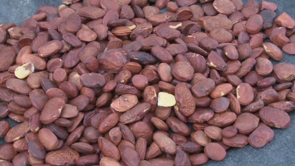 Startup: Nuts to biofuel