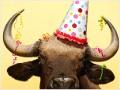 5 reasons this bull market can still run