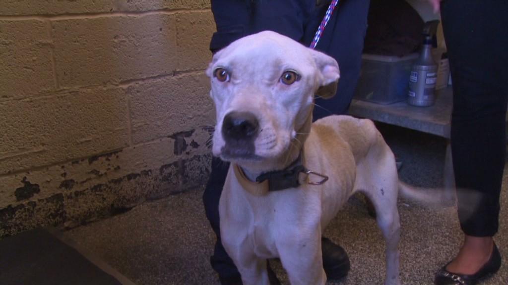Detroit's stray dog epidemic