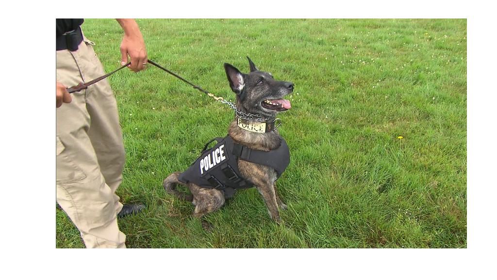 Bulletproof vests for canine cops