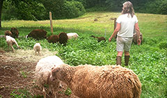 24 hours with a shepherd