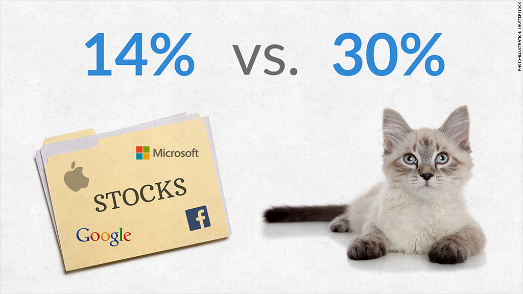 stocks vs cats