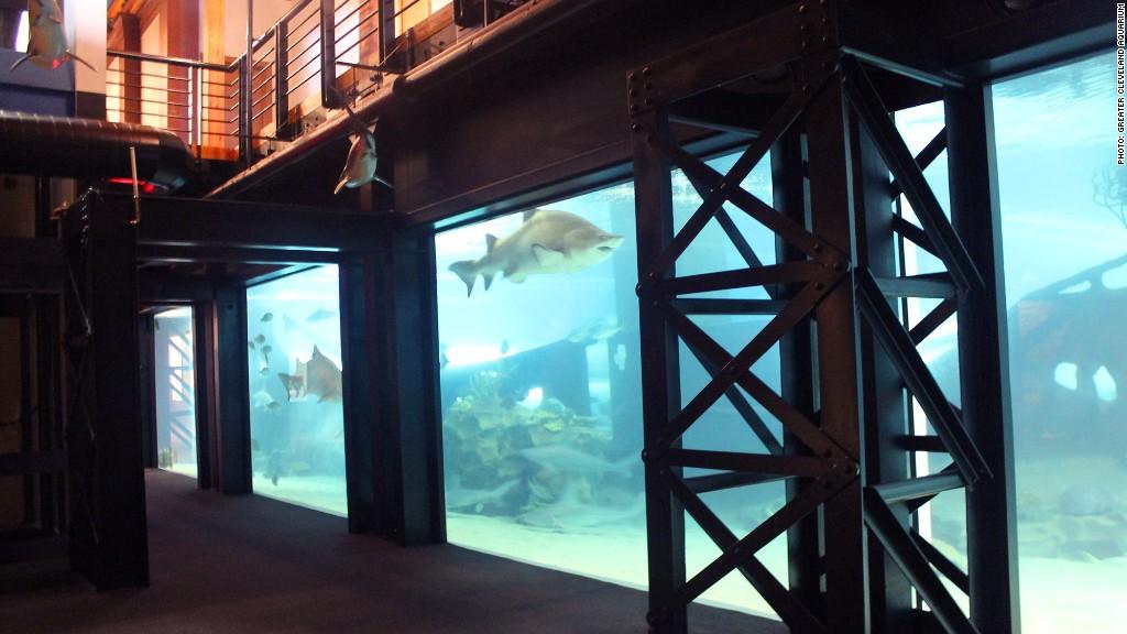 repurposed infrastructure aquarium