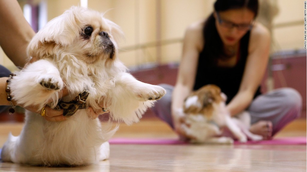 China S Booming 1 5 Billion Pet Care Market