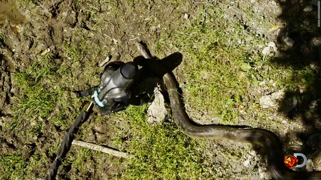 eaten alive snake