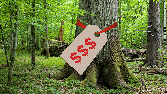 Timber! Why the rich are buying trees