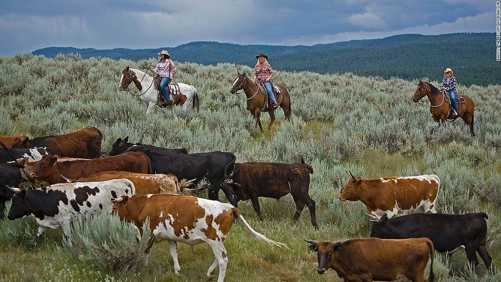 family travel cattle drive