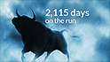 bull gallery on the run 2115