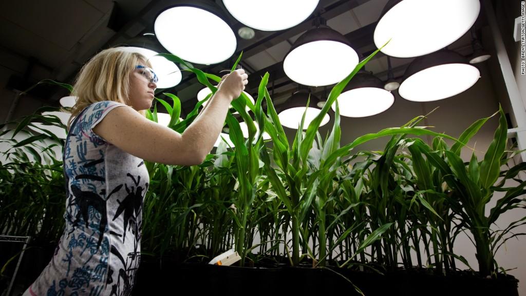 climate change monsanto gmo crop