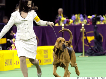 Cost of getting a show dog to Westminster