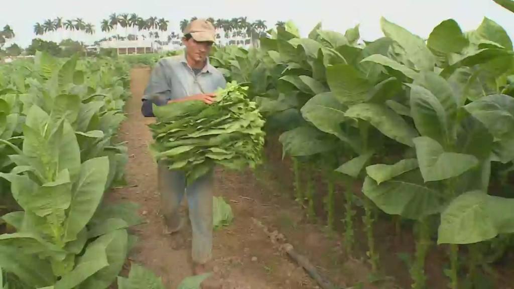 Cuban cigar industry prepares for US demand