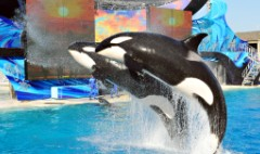 SeaWorld stock hits all-time low