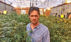 24 Hours with a marijuana grower