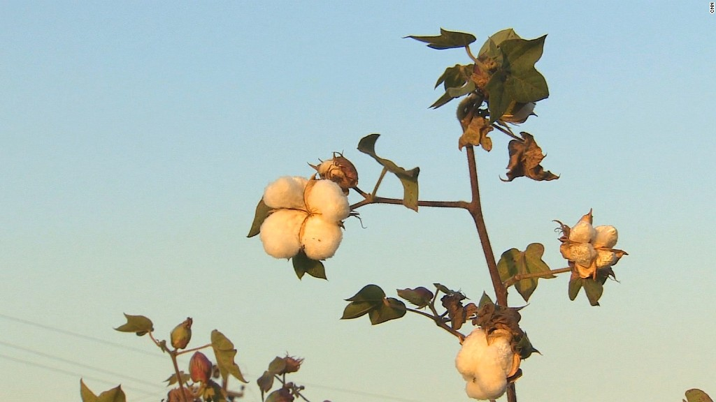 India's farmers hit by cotton surplus
