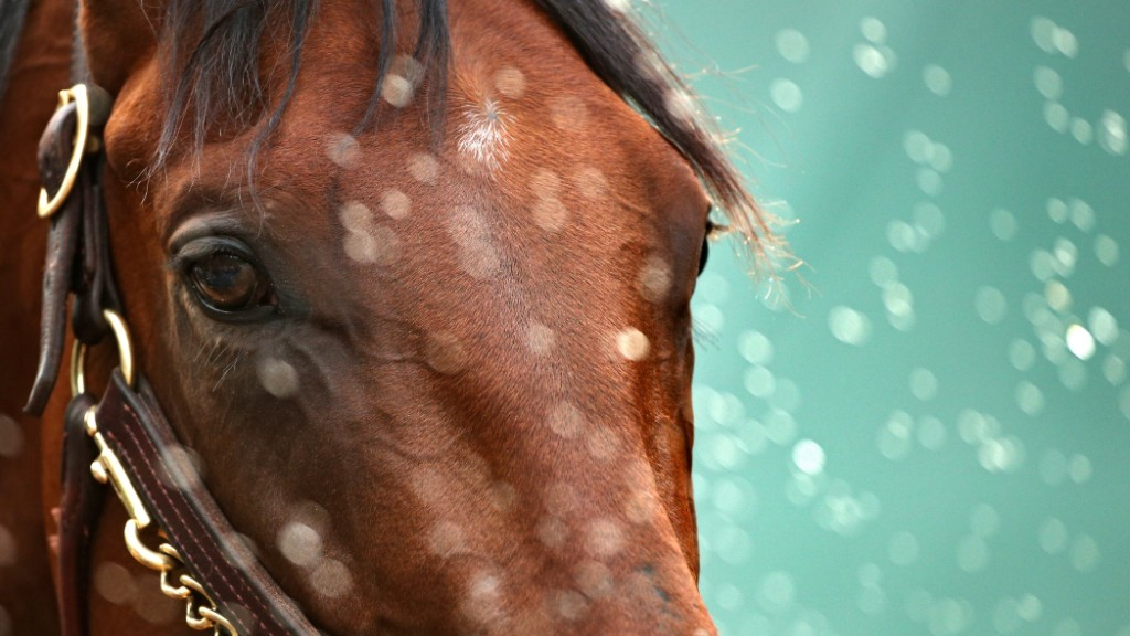 Why American Pharoah wins without the triple crown