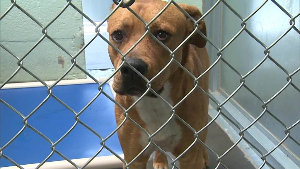 Owner pays thousands to get dogs off death row