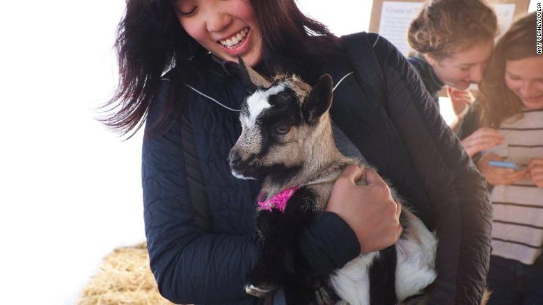 Goat festival Facebook
