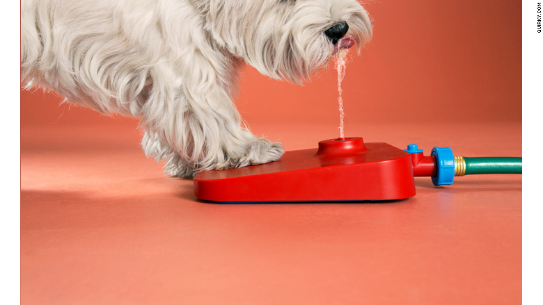 Pawcet The Dog Water Fountain Amp Strange Products Quirky