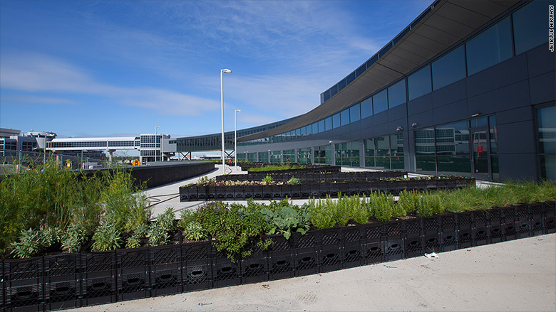 jetblue farm jfk
