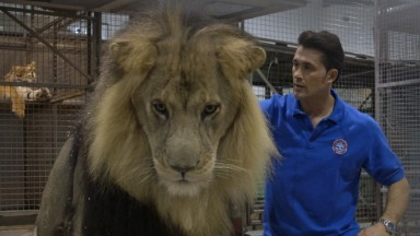 24 hours with a lion trainer