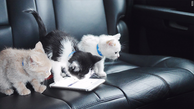 Image result for uber kittens 2018