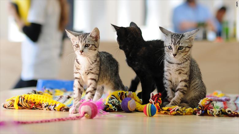 uber kittens 1