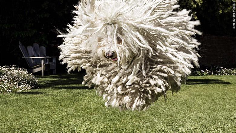 The Best Photo Of Any Dog Ever Mark Zuckerberg S Dog