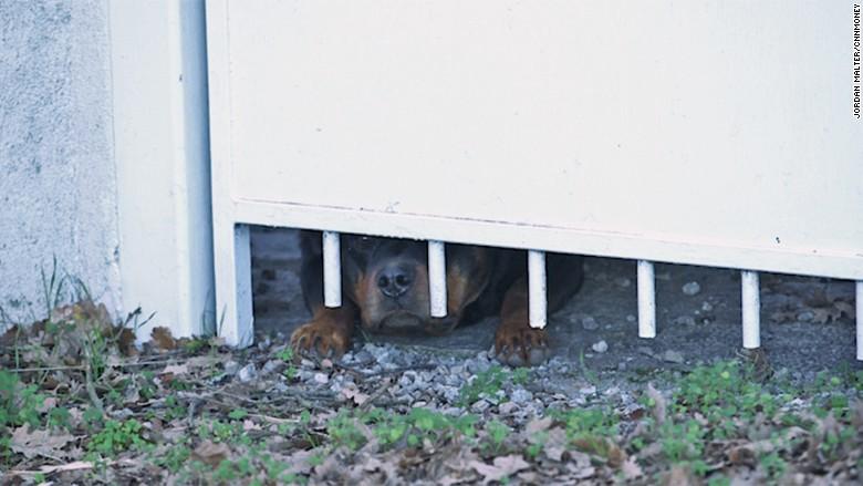 maria duval 5 guard dog gate still