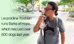 Puerto Rico has become 'dead dog island'