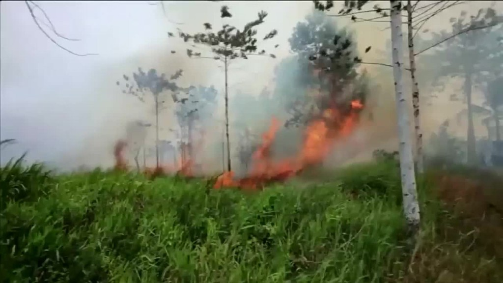 Indonesia fires intentionally set to grow palm oil
