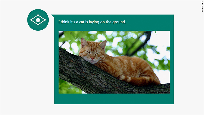 microsoft caption bot cat