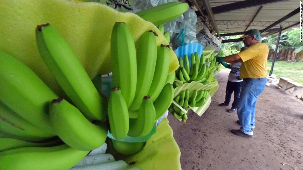 Banana crisis: Industry tries to save Latin American exports