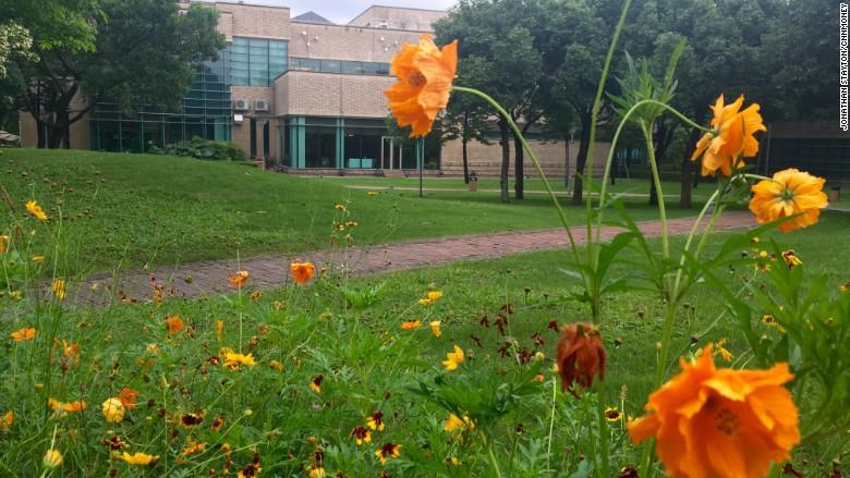 huawei campus greenery
