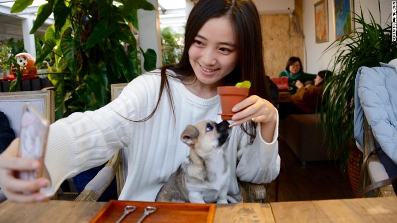 Meitu Wang Xiaoying 2