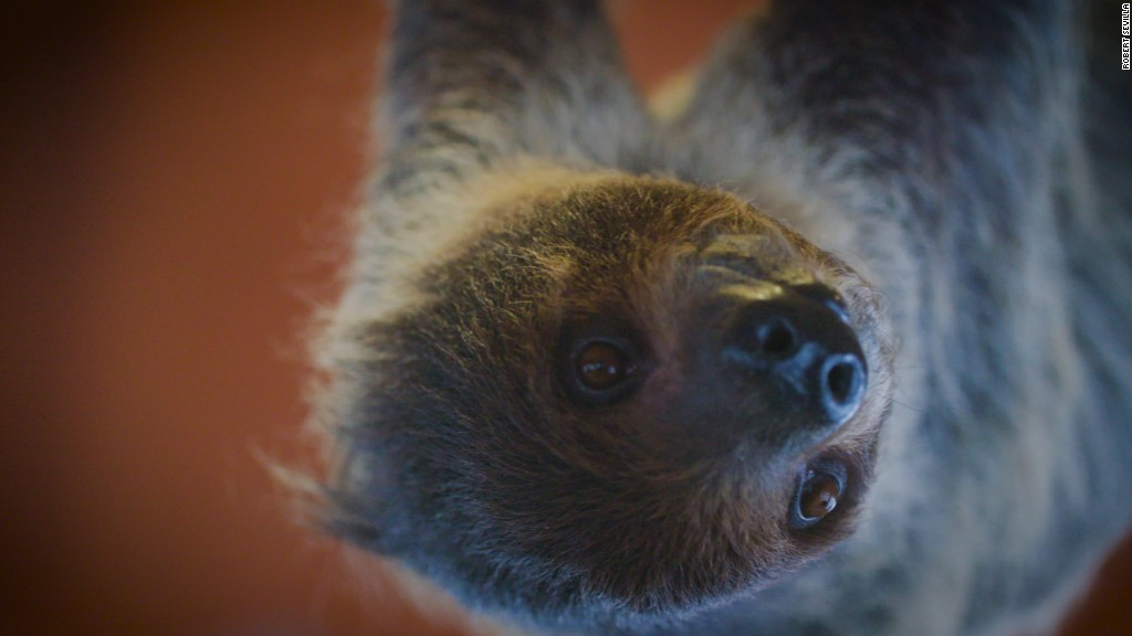 A sloth sleepover! Yes, that's a real thing