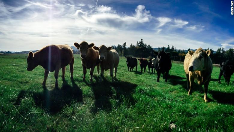 million dollar startups crowd cow 3