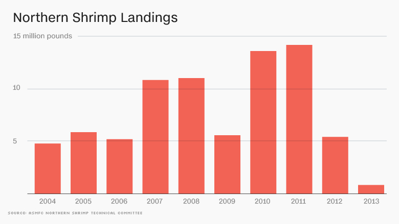 northern shrimp landings