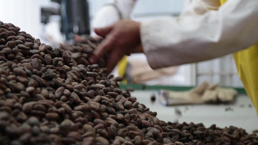 Building an organic chocolate business in Ecuador