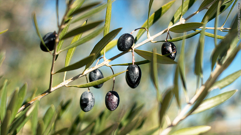 ripe spanish olives fair trade