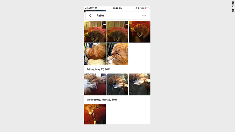 google photos pets test