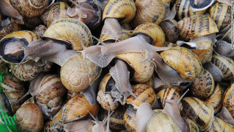 snails farm france