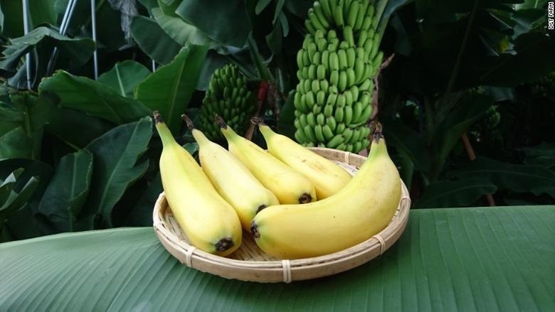 mongee bananas 2