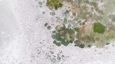 Drones are helping scientists fight wildlife extinction