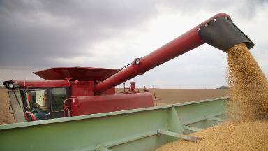 Trade war fallout: Soybean prices plunge to a 10-year low